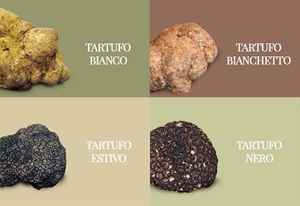 tipologie di tartufo